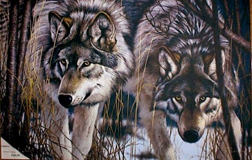 A pair of wolves.